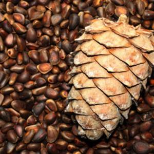 Семена кедровой сосны
