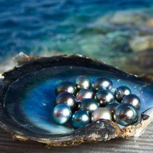 Жемчуг из морских ушек