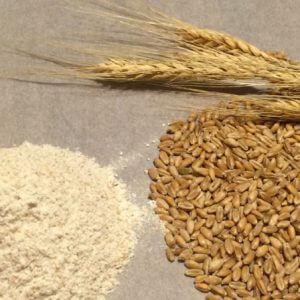 Пшеничный глютен