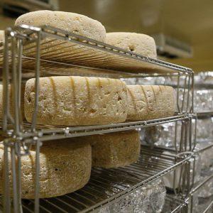 Производство сыра с белой плесенью