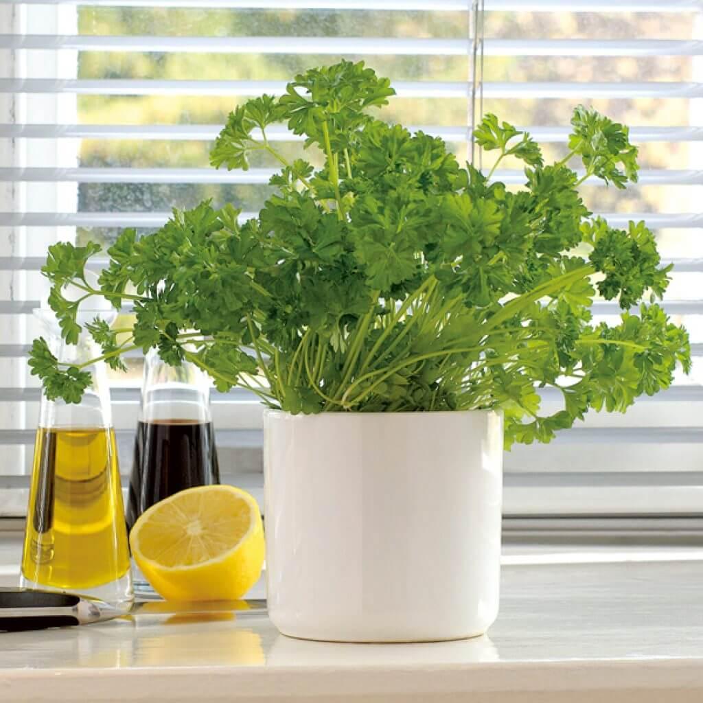 Как выращивать салат в домашних условиях 43