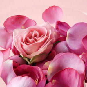 Лепестки розовых роз