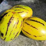 Пепино (дынная груша)