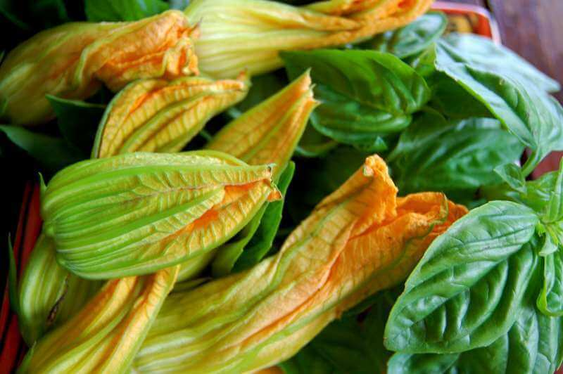 Лечебные свойства листьев тыквы