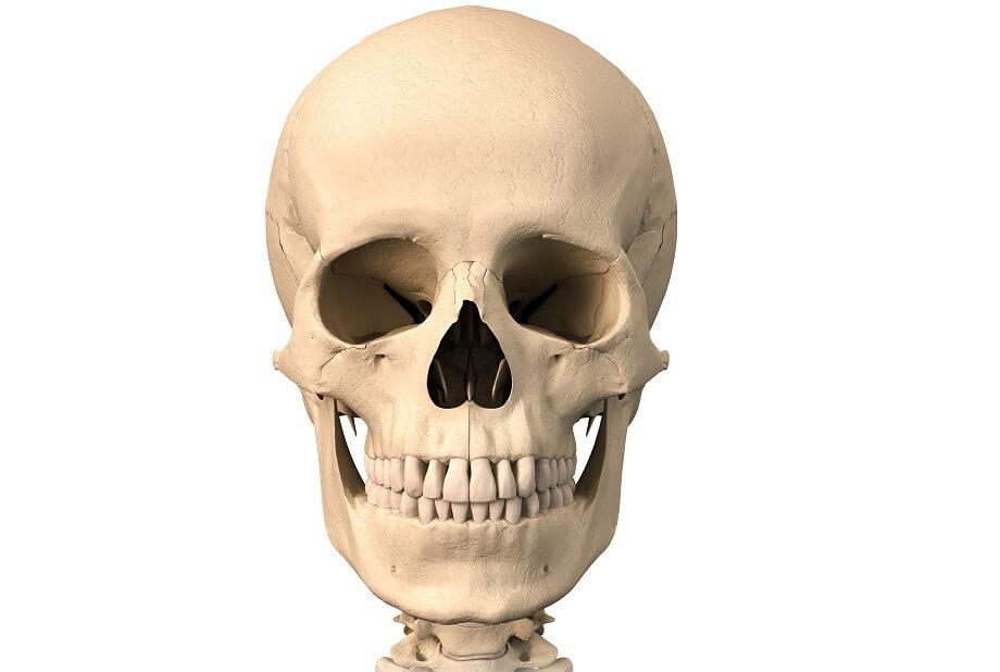 картинка кости лица подробности опять вдавался