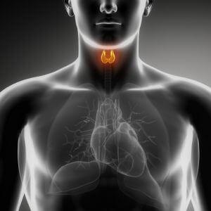 Рентген (рентгенография) щитовидной железы