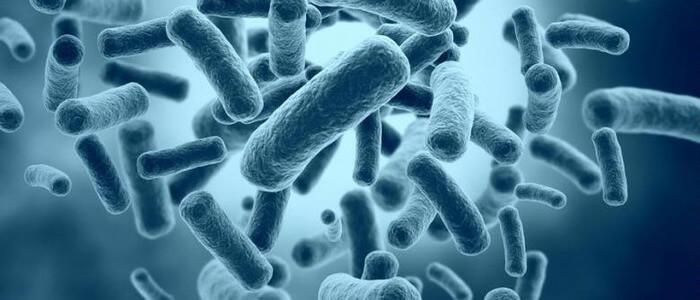 Эубактерии