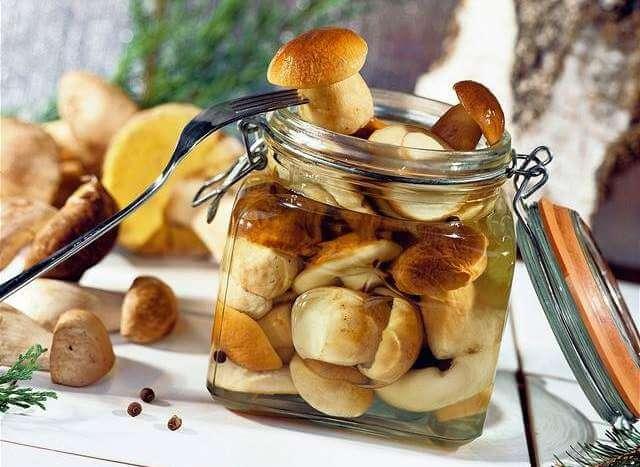 Польза и вред грибов для организма
