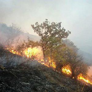 Возгорания в лесистой местности